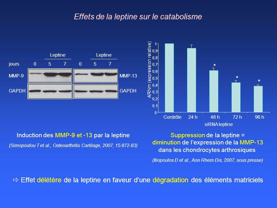 jours057 MMP-9 GAPDH 057 MMP-13 GAPDH Leptine 0 0,1 0,2 0,3 0,4 0,5 0,6 0,7 0,8 0,9 1 Contrôle24 h48 h72 h96 h ARNm (expression relative) siRNA leptin