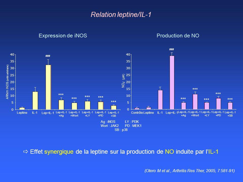 Relation leptine/IL-1 0 5 10 15 20 25 30 35 40 LeptineIL-1 Lep+IL-1 +Ag Lep+IL-1 +Wort Lep+IL-1 +LY Lep+IL-1 +PD Lep+IL-1 +SB ARNm iNOS (unité arbitra