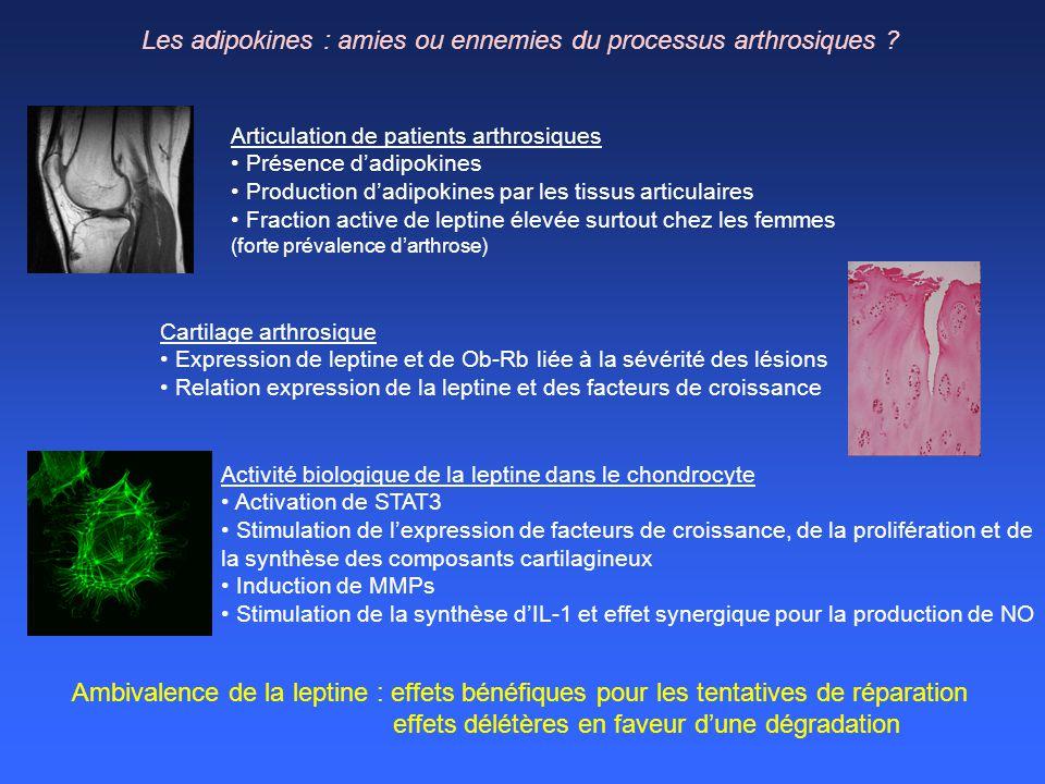Articulation de patients arthrosiques Présence dadipokines Production dadipokines par les tissus articulaires Fraction active de leptine élevée surtou