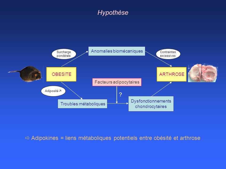 OBESITEARTHROSE Surcharge pondérale Anomalies biomécaniques Contraintes excessives Adiposité Troubles métaboliques Dysfonctionnements chondrocytaires