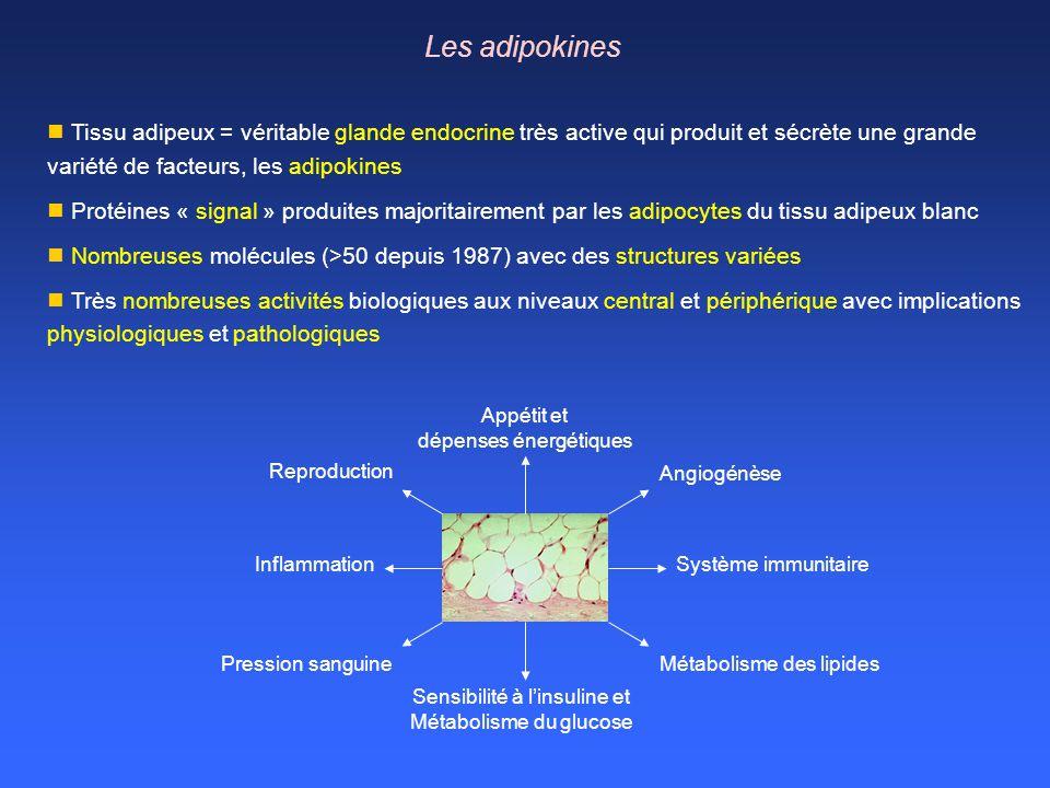 Les adipokines Appétit et dépenses énergétiques Reproduction Angiogénèse Sensibilité à linsuline et Métabolisme du glucose Inflammation Pression sangu