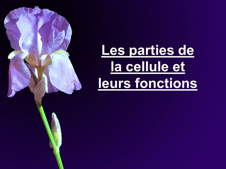 ________________ : Présents chez les fleurs et fruits colorés.