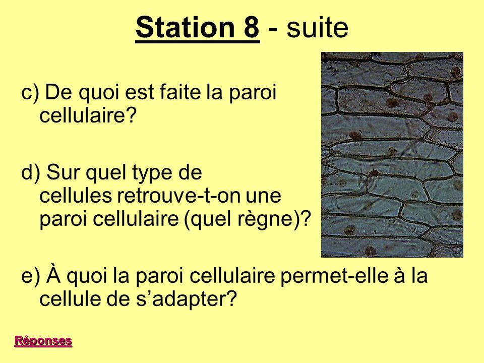 Station 8 - suite c) De quoi est faite la paroi cellulaire? d) Sur quel type de cellules retrouve-t-on une paroi cellulaire (quel règne)? e) À quoi la