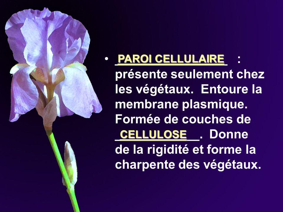 ________________ : présente seulement chez les végétaux. Entoure la membrane plasmique. Formée de couches de ____________. Donne de la rigidité et for