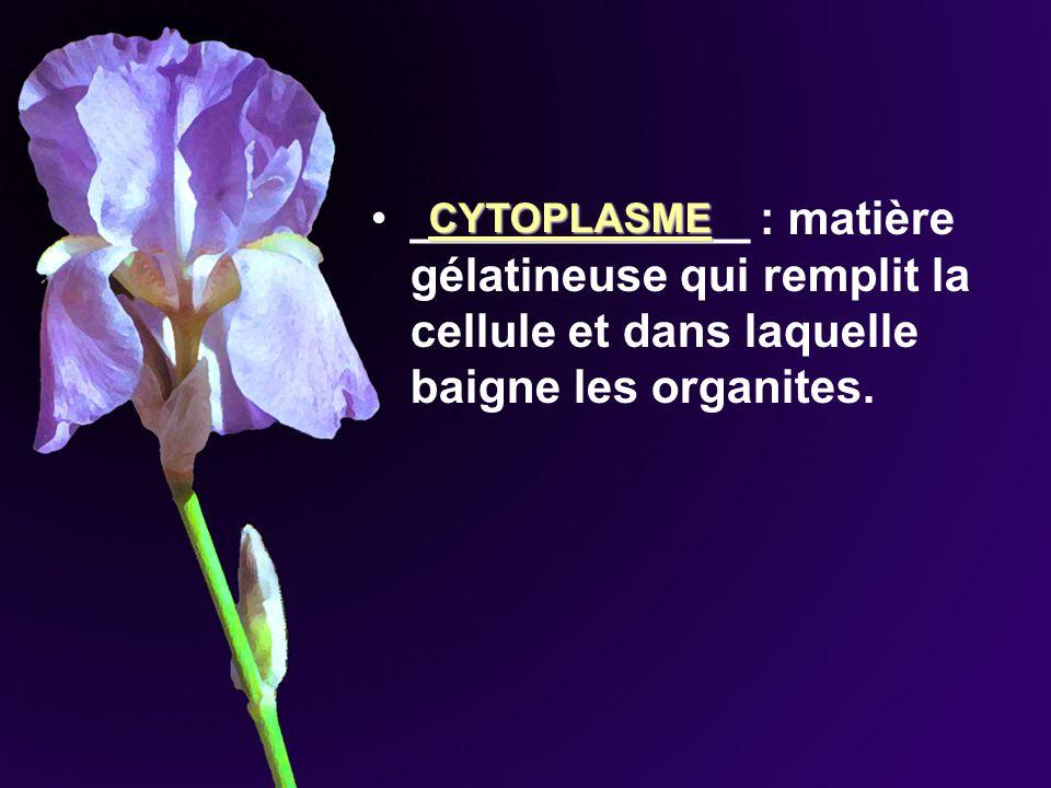 _____________ : matière gélatineuse qui remplit la cellule et dans laquelle baigne les organites. CYTOPLASME