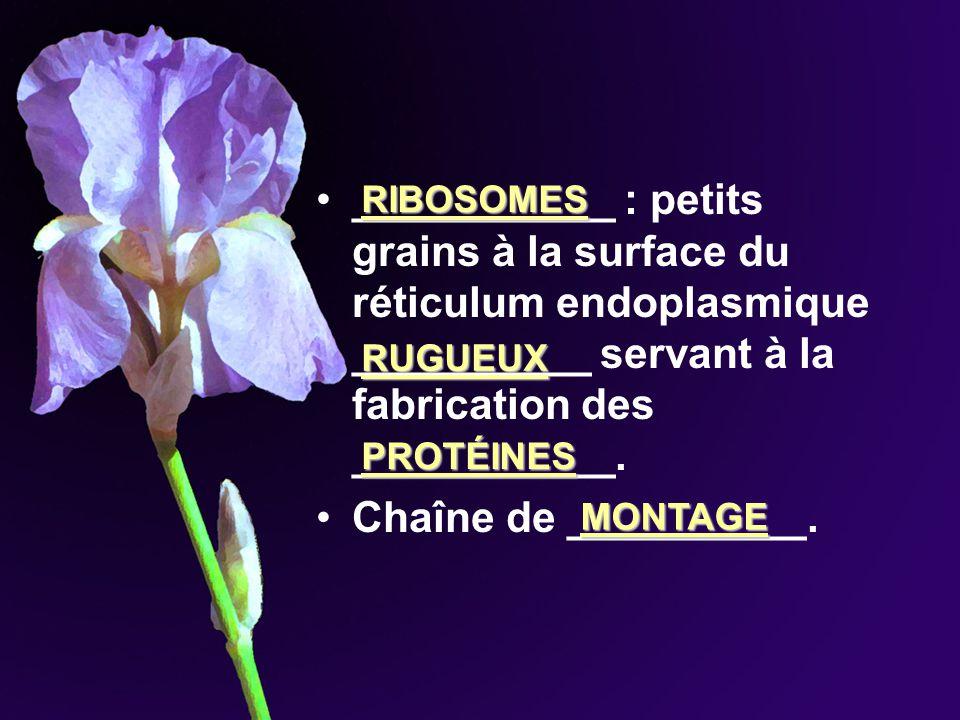 ___________ : petits grains à la surface du réticulum endoplasmique __________ servant à la fabrication des ___________. Chaîne de __________. RIBOSOM