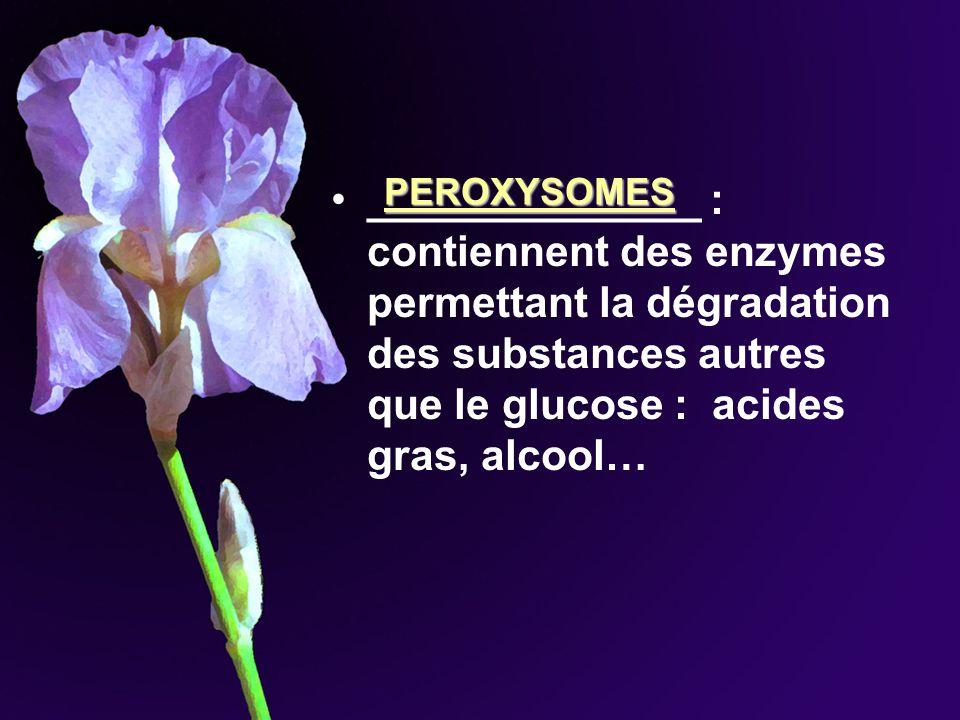 ______________ : contiennent des enzymes permettant la dégradation des substances autres que le glucose : acides gras, alcool… PEROXYSOMES