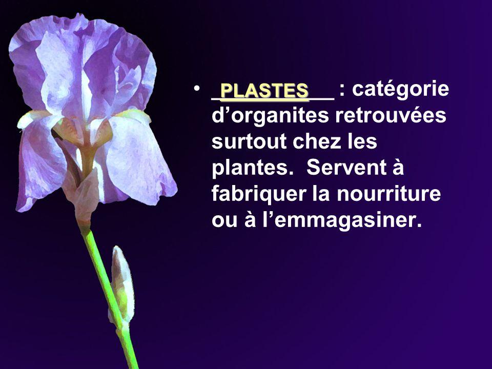 __________ : catégorie dorganites retrouvées surtout chez les plantes. Servent à fabriquer la nourriture ou à lemmagasiner. PLASTES