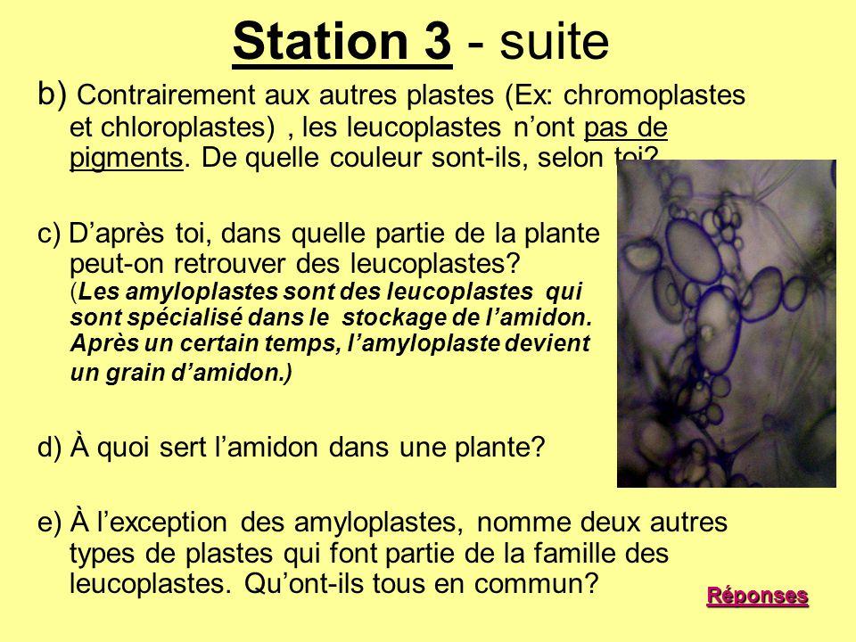 Station 3 - suite b) Contrairement aux autres plastes (Ex: chromoplastes et chloroplastes), les leucoplastes nont pas de pigments. De quelle couleur s