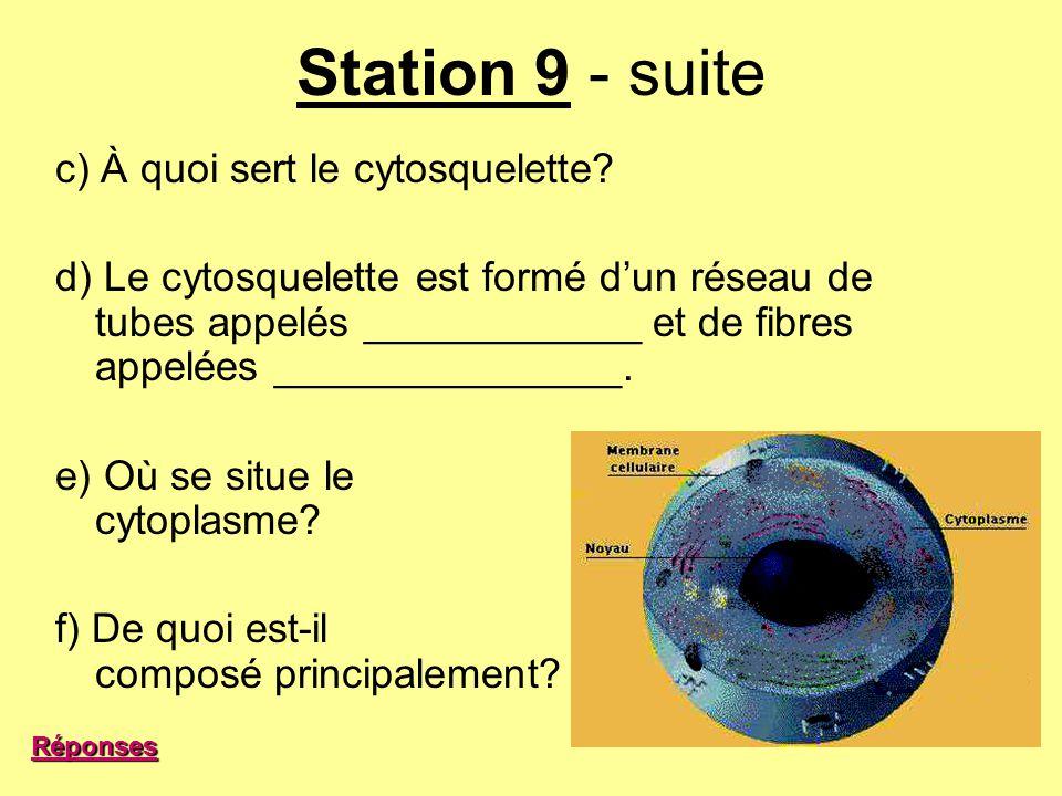 Station 9 - suite c) À quoi sert le cytosquelette? d) Le cytosquelette est formé dun réseau de tubes appelés ____________ et de fibres appelées ______