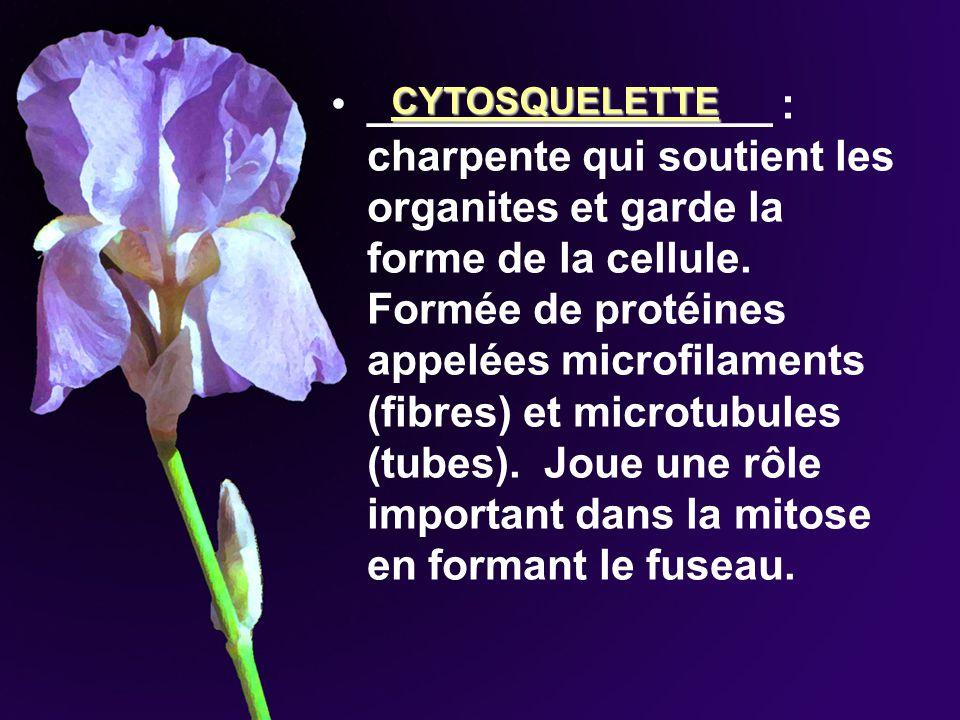 _________________ : charpente qui soutient les organites et garde la forme de la cellule. Formée de protéines appelées microfilaments (fibres) et micr