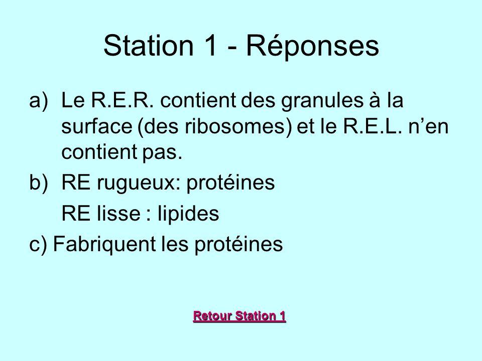 Station 1 - Réponses a)Le R.E.R. contient des granules à la surface (des ribosomes) et le R.E.L. nen contient pas. b)RE rugueux: protéines RE lisse :