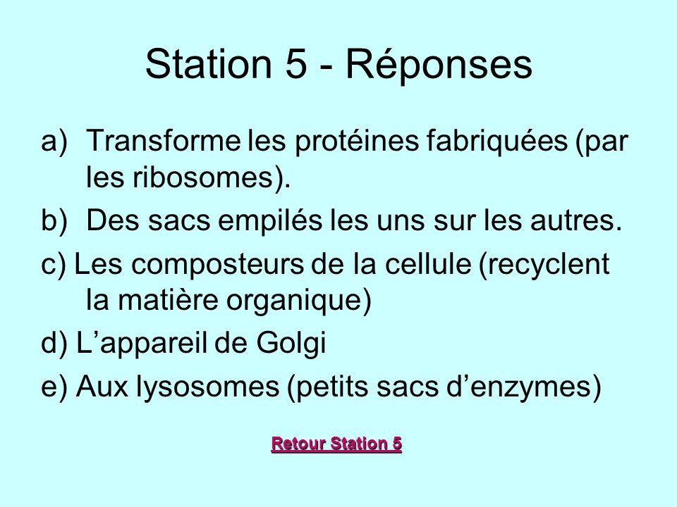 Station 5 - Réponses a)Transforme les protéines fabriquées (par les ribosomes). b)Des sacs empilés les uns sur les autres. c) Les composteurs de la ce