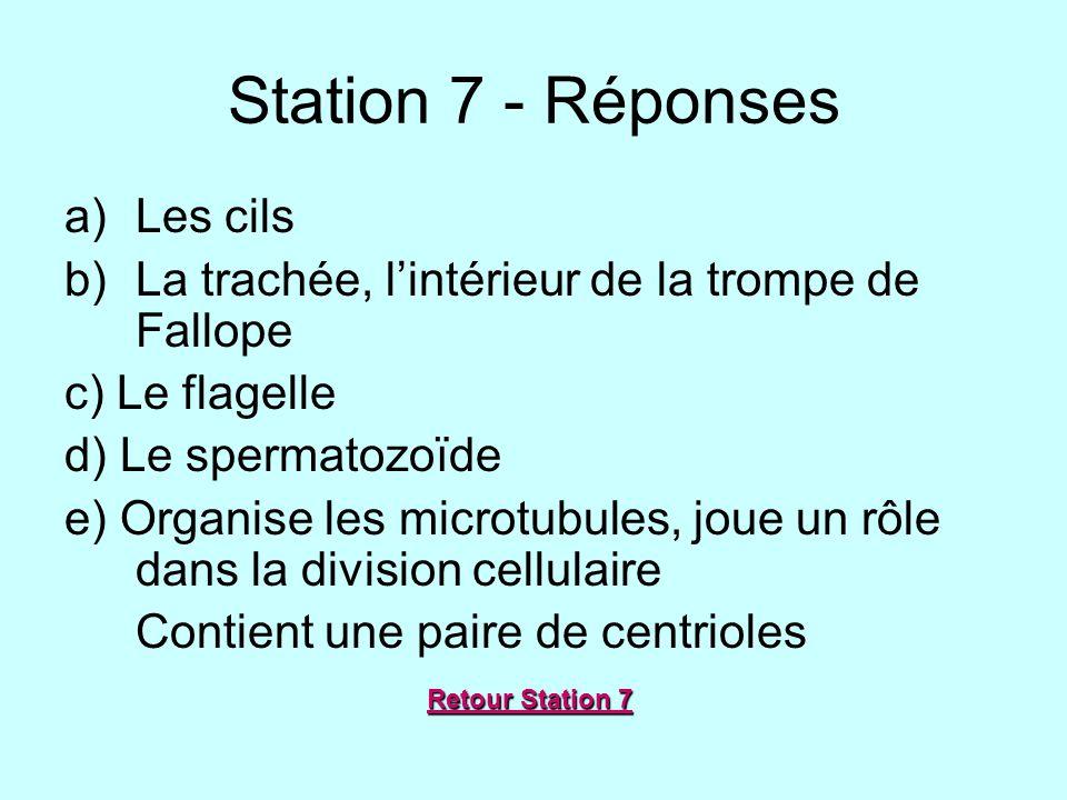 Station 7 - Réponses a)Les cils b)La trachée, lintérieur de la trompe de Fallope c) Le flagelle d) Le spermatozoïde e) Organise les microtubules, joue