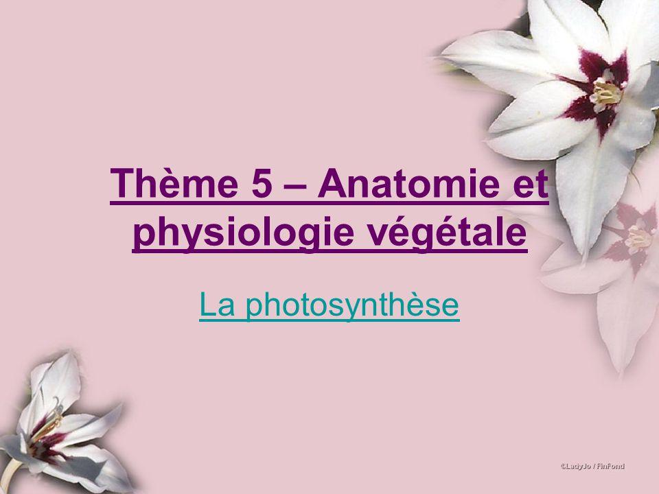 Thème 5 – Anatomie et physiologie végétale La photosynthèse