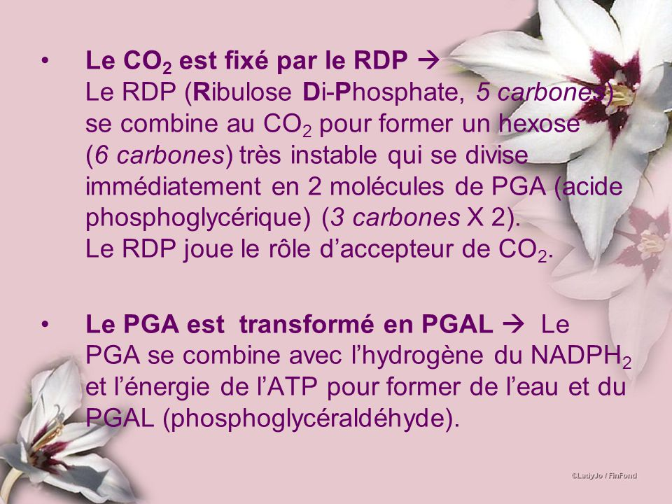 Le CO 2 est fixé par le RDP Le RDP (Ribulose Di-Phosphate, 5 carbones) se combine au CO 2 pour former un hexose (6 carbones) très instable qui se divi