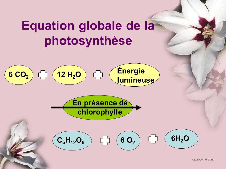 Equation globale de la photosynthèse 6 CO 2 12 H 2 O Énergie lumineuse En présence de chlorophylle 6H 2 O C 6 H 12 O 6 6 O 2