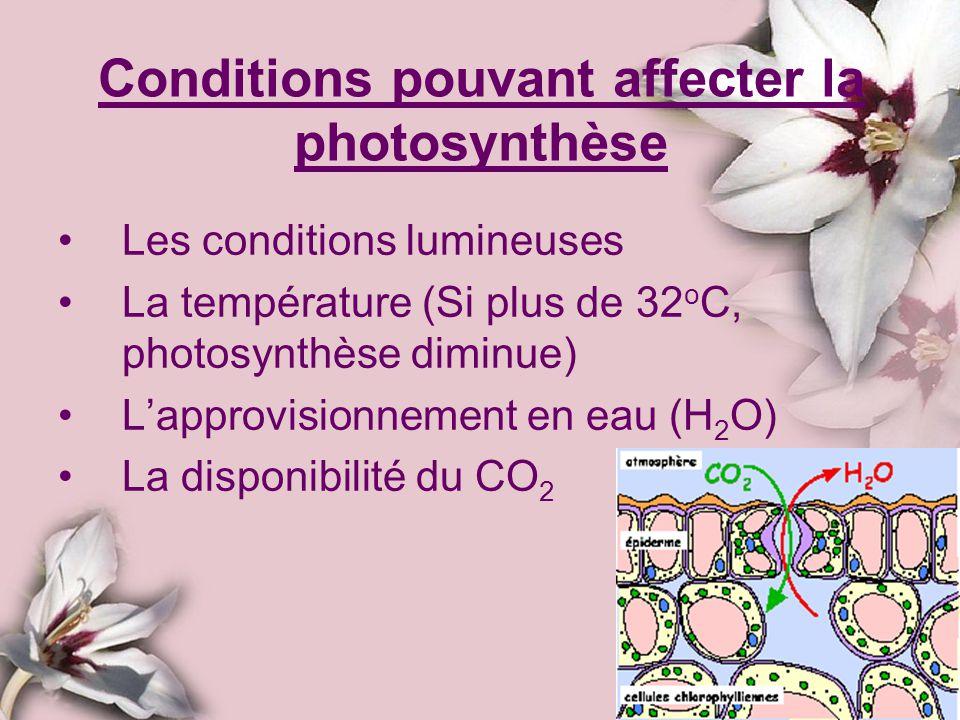 Conditions pouvant affecter la photosynthèse Les conditions lumineuses La température (Si plus de 32 o C, photosynthèse diminue) Lapprovisionnement en
