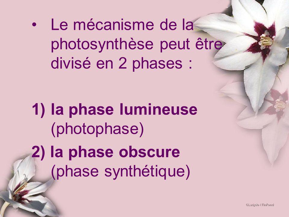 Le mécanisme de la photosynthèse peut être divisé en 2 phases : 1)la phase lumineuse (photophase) 2) la phase obscure (phase synthétique)