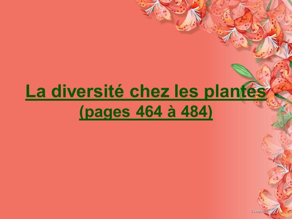 (Page 477-480) Les gymnospermes sont des plantes à ________.