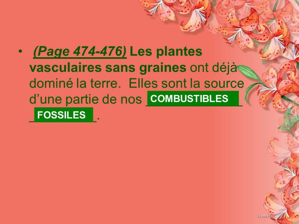 (Page 474-476) Les plantes vasculaires sans graines ont déjà dominé la terre. Elles sont la source dune partie de nos _____________ _________. FOSSILE