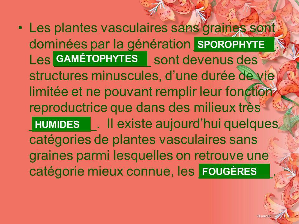 Les plantes vasculaires sans graines sont dominées par la génération ___________. Les _____________ sont devenus des structures minuscules, dune durée