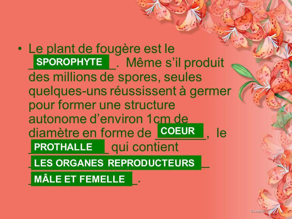 Le plant de fougère est le ____________. Même sil produit des millions de spores, seules quelques-uns réussissent à germer pour former une structure a