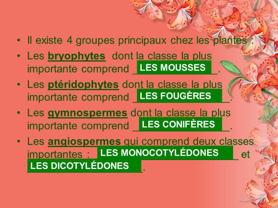 Il existe 4 groupes principaux chez les plantes : Les bryophytes dont la classe la plus importante comprend ______________. Les ptéridophytes dont la