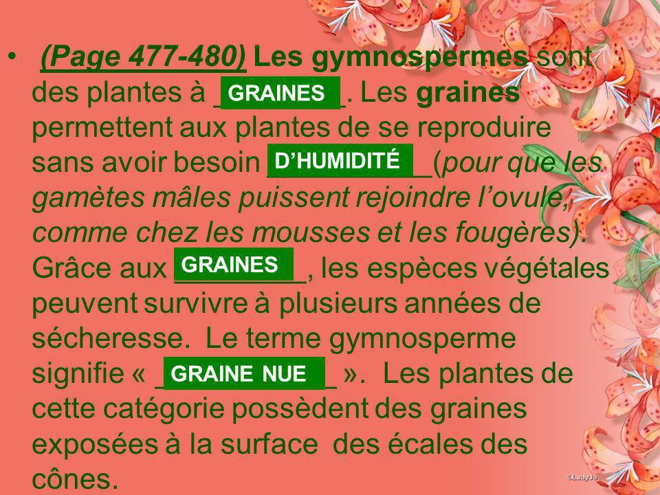 (Page 477-480) Les gymnospermes sont des plantes à ________. Les graines permettent aux plantes de se reproduire sans avoir besoin __________(pour que