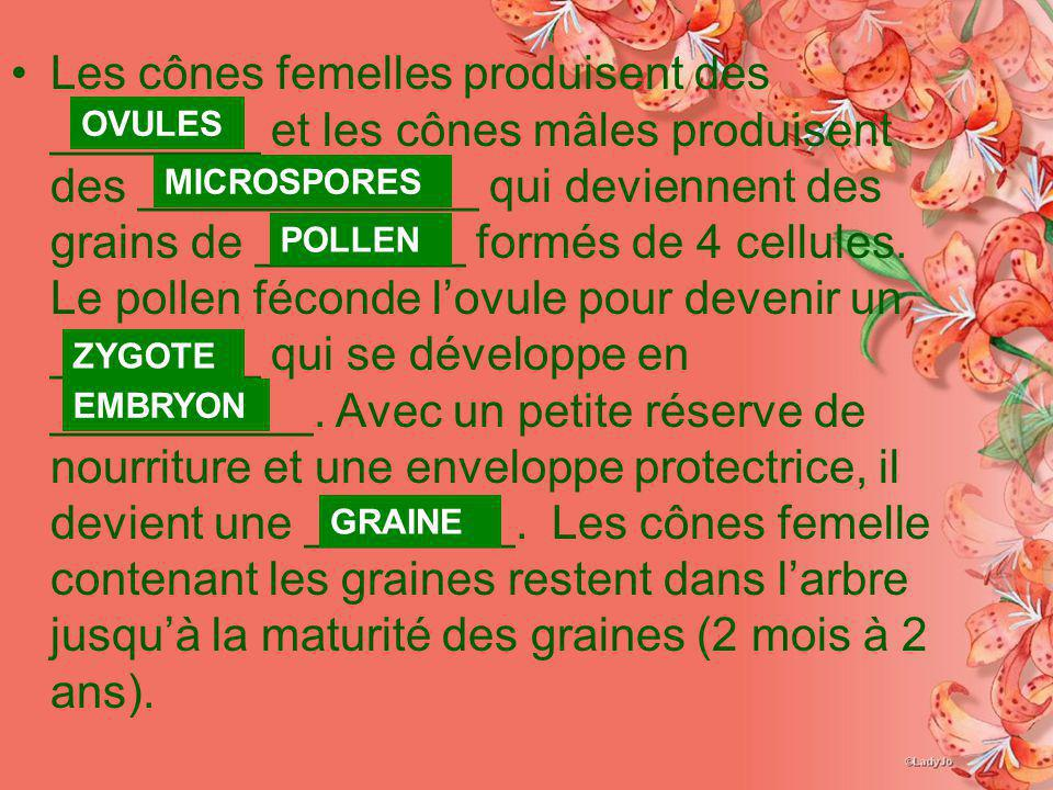 Les cônes femelles produisent des ________ et les cônes mâles produisent des _____________ qui deviennent des grains de ________ formés de 4 cellules.