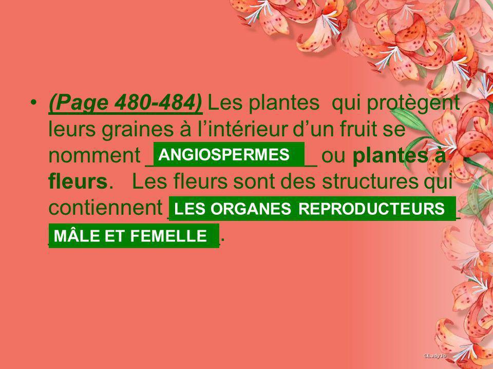 (Page 480-484) Les plantes qui protègent leurs graines à lintérieur dun fruit se nomment ______________ ou plantes à fleurs. Les fleurs sont des struc