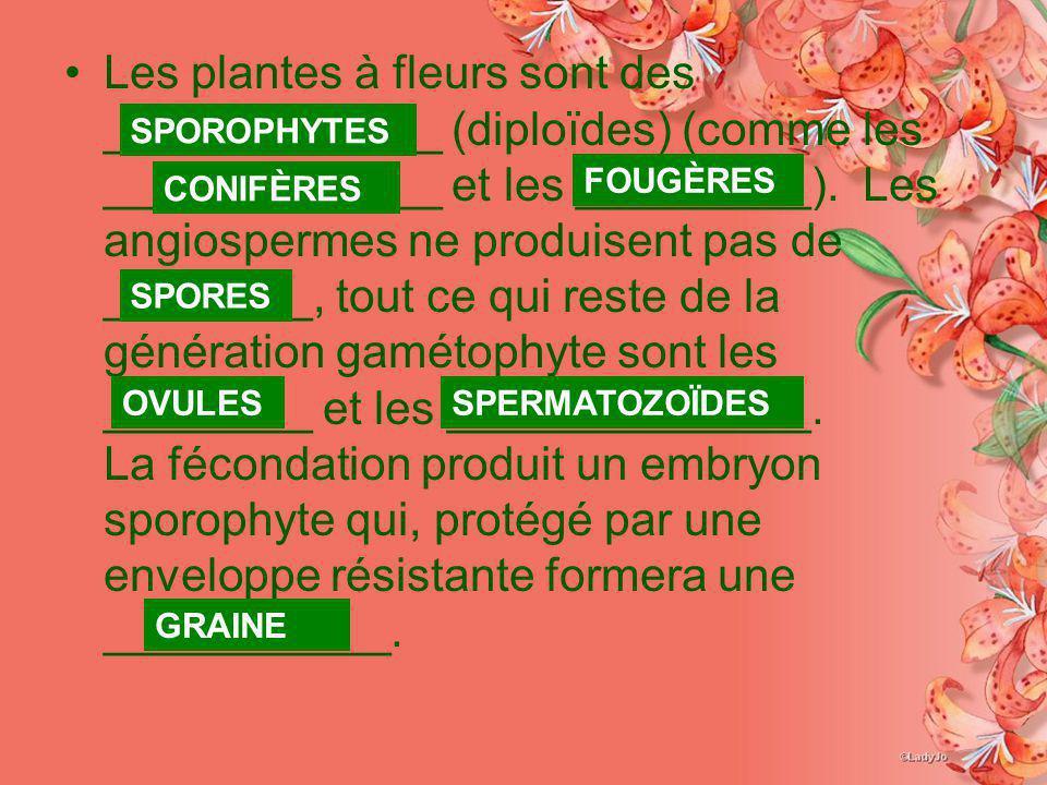 Les plantes à fleurs sont des _____________ (diploïdes) (comme les _____________ et les _________). Les angiospermes ne produisent pas de ________, to