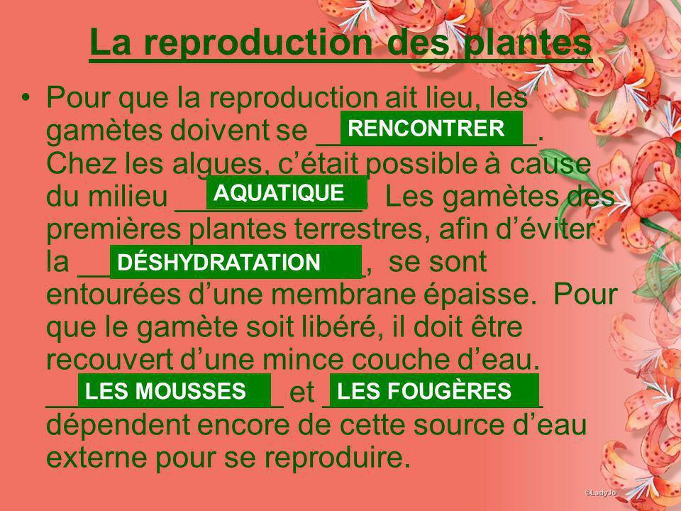 La reproduction des plantes Pour que la reproduction ait lieu, les gamètes doivent se _____________. Chez les algues, cétait possible à cause du milie