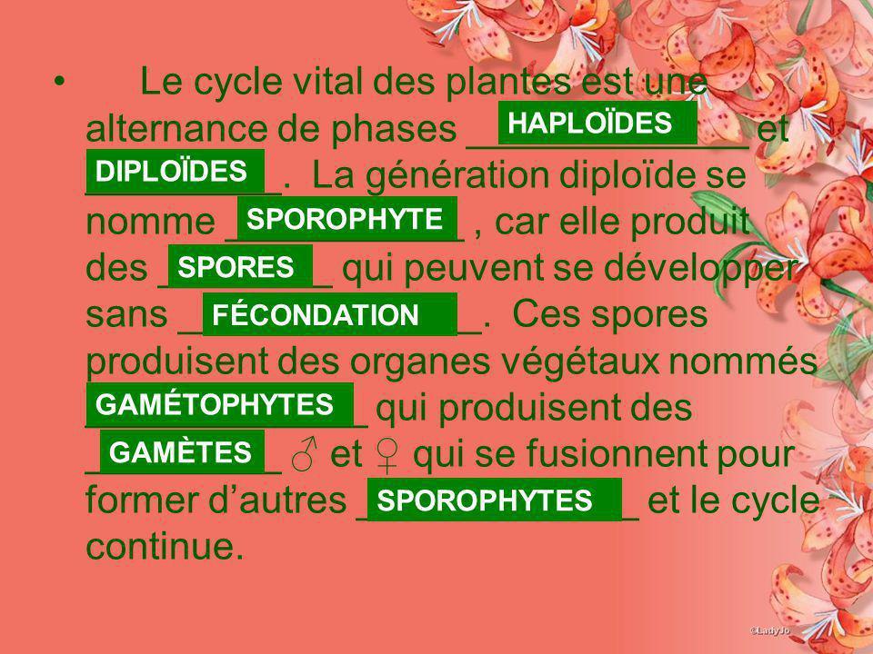 Le cycle vital des plantes est une alternance de phases _____________ et _________. La génération diploïde se nomme ___________, car elle produit des
