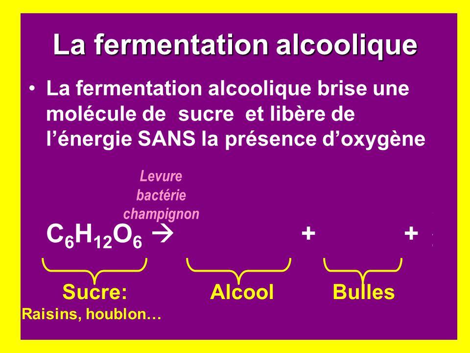 La fermentation alcoolique La fermentation alcoolique brise une molécule de sucre et libère de lénergie SANS la présence doxygène C 6 H 12 O 6 2C 2 H