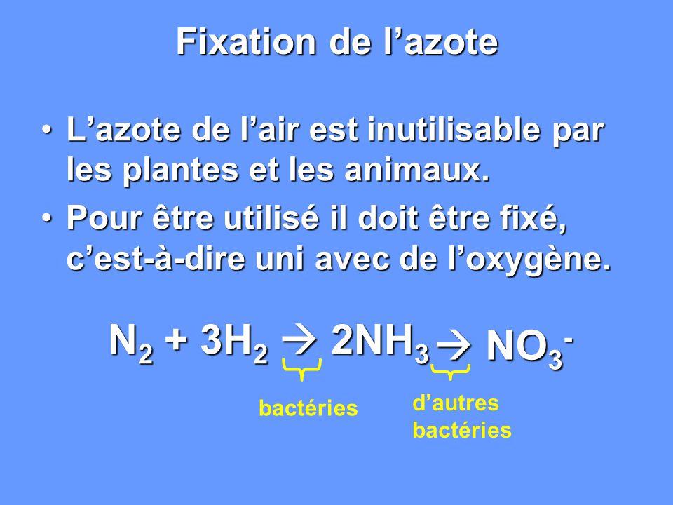 Fixation de lazote Lazote de lair est inutilisable par les plantes et les animaux.Lazote de lair est inutilisable par les plantes et les animaux. Pour