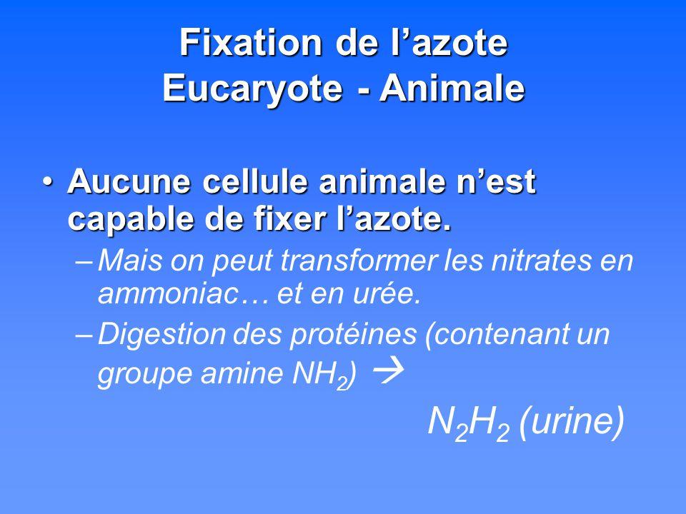 Fixation de lazote Eucaryote - Animale Aucune cellule animale nest capable de fixer lazote.Aucune cellule animale nest capable de fixer lazote. –Mais