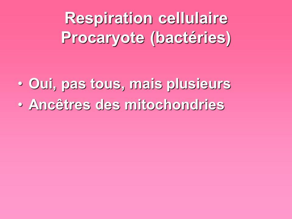 Respiration cellulaire Eucaryote - Animale Oui toujoursOui toujours Énergie consomméeÉnergie consommée –Système musculaire