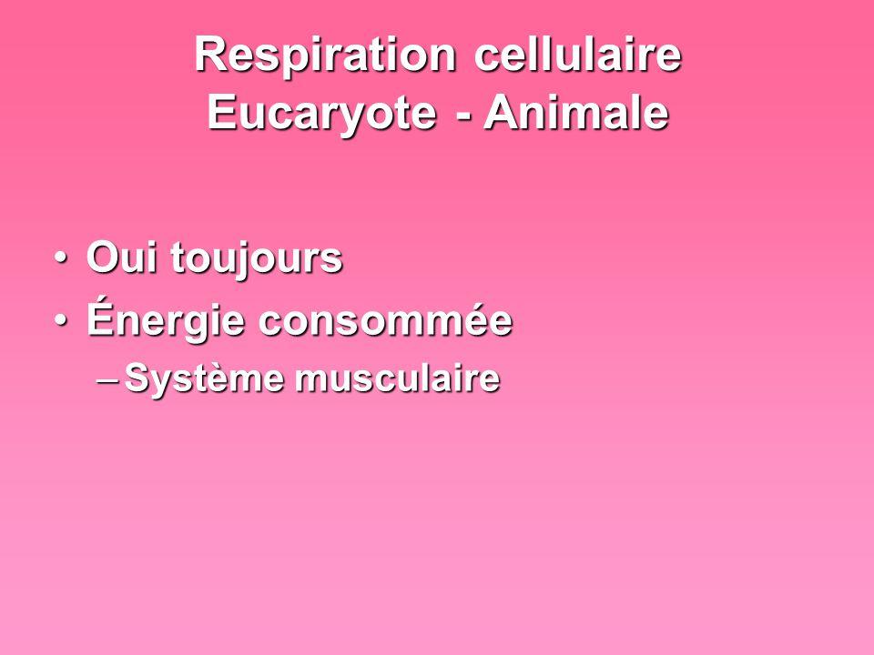 Respiration cellulaire Eucaryote - Végétale OuiOui Permet dutiliser lénergie en réservePermet dutiliser lénergie en réserve –Nuit absence de soleil –Hiver pas de feuilles
