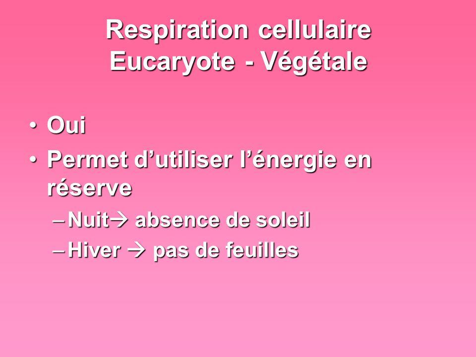 Respiration cellulaire Eucaryote - Végétale OuiOui Permet dutiliser lénergie en réservePermet dutiliser lénergie en réserve –Nuit absence de soleil –H