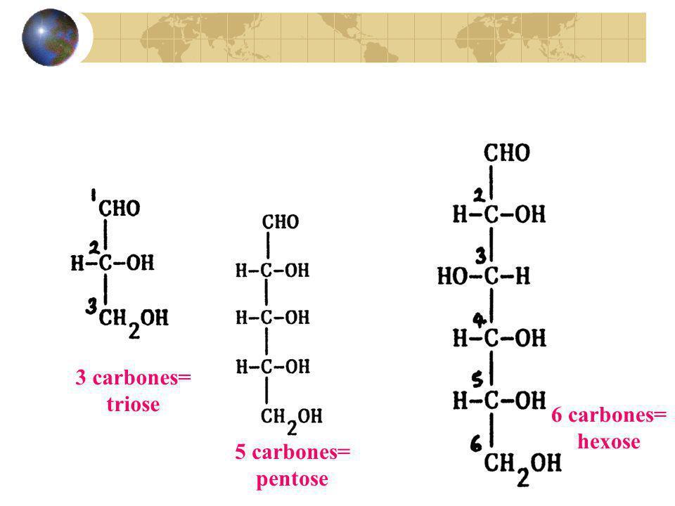 3 carbones= triose 5 carbones= pentose 6 carbones= hexose