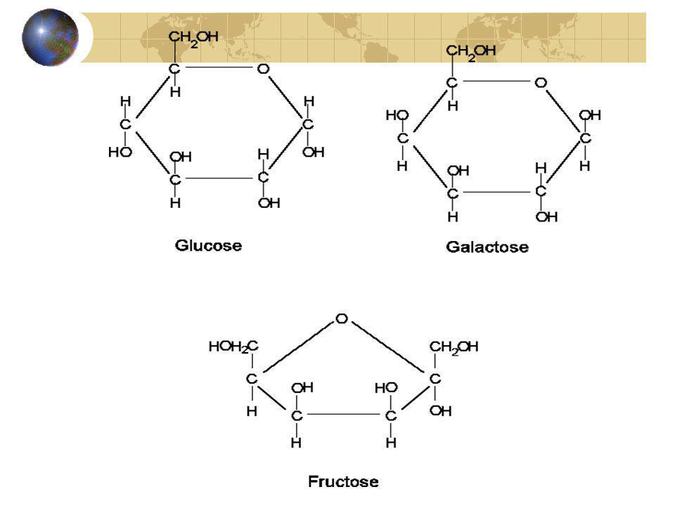 Les glucides (hydrates de carbones ou sucres) Les disaccharides (sucres doubles ) Un disaccharide est formé de deux monosaccharides (hexoses), qui en se combinant forment une liaison glycosidique et libèrent de leau.