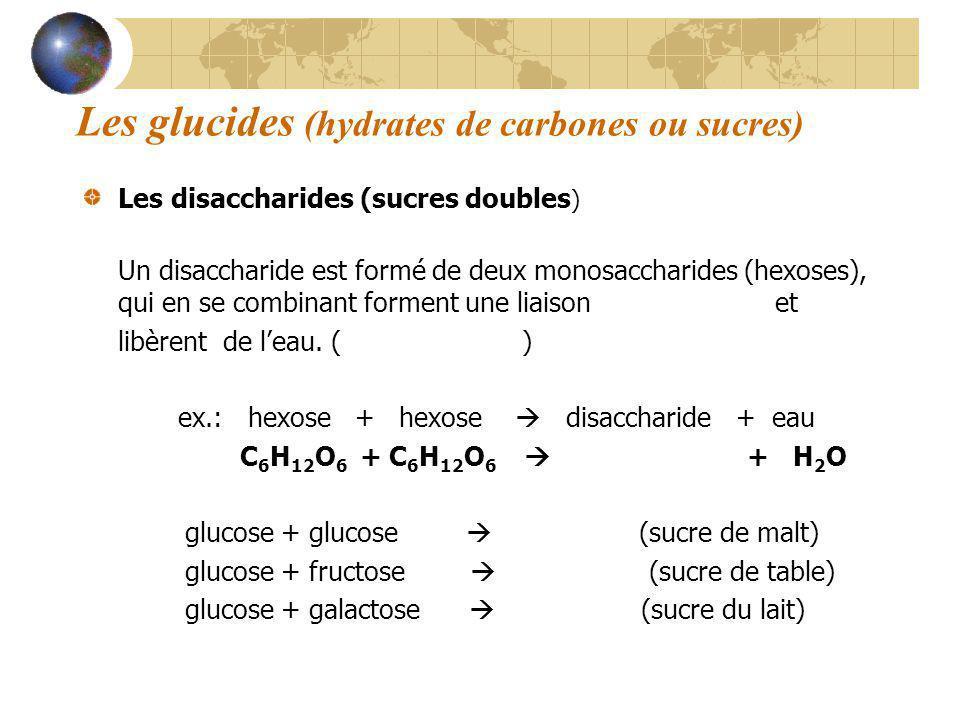 Les glucides (hydrates de carbones ou sucres) Les disaccharides (sucres doubles ) Un disaccharide est formé de deux monosaccharides (hexoses), qui en