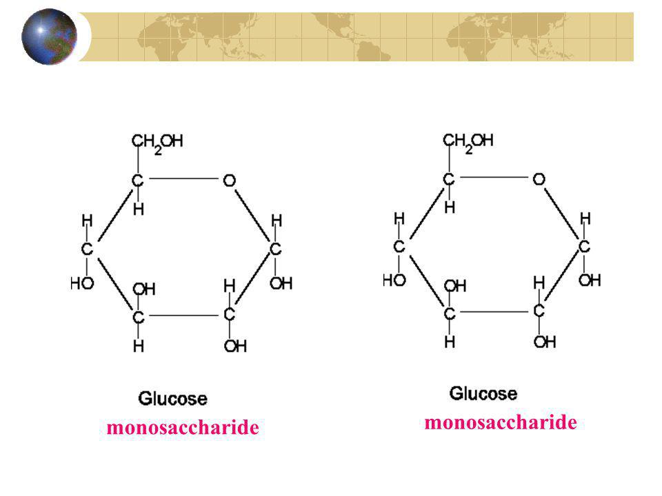 Disaccharide (+ H 2 O)