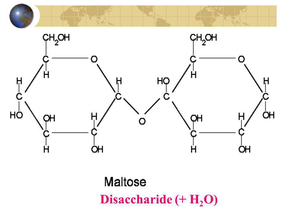 Les glucides (hydrates de carbones ou sucres) Les polysaccharides (plusieurs sucres) Les polysaccharides sont formés de longues chaînes de glucose (de 12 à plusieurs milliers).