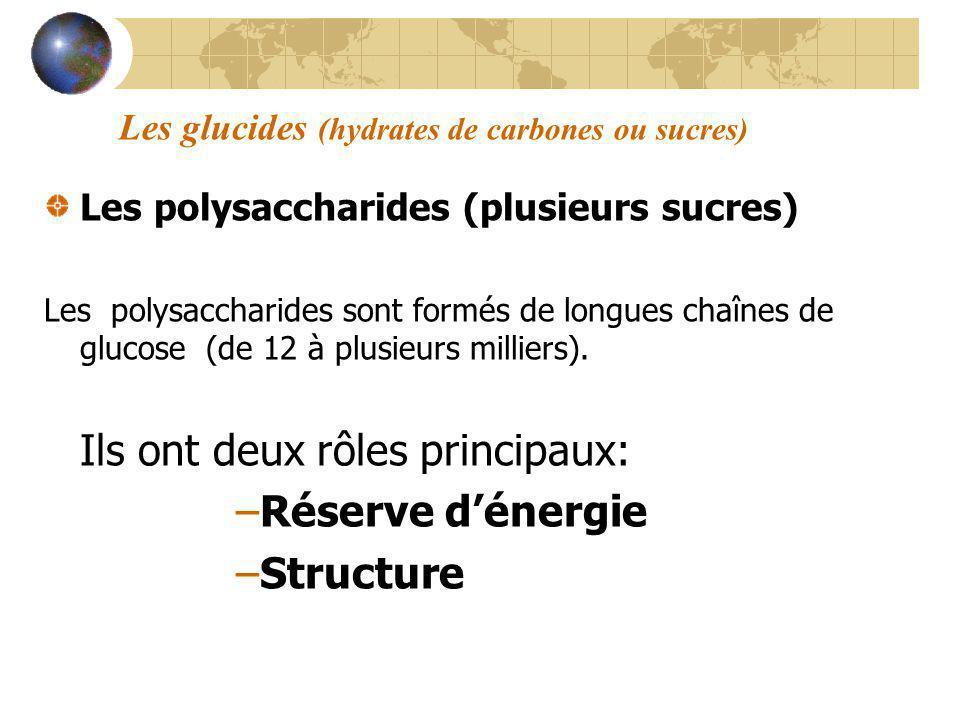 Les glucides (hydrates de carbones ou sucres) Les polysaccharides (plusieurs sucres) Les polysaccharides sont formés de longues chaînes de glucose (de