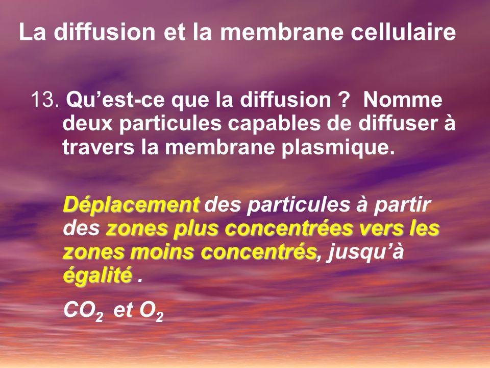 La diffusion et la membrane cellulaire 13. Quest-ce que la diffusion ? Nomme deux particules capables de diffuser à travers la membrane plasmique. Dép