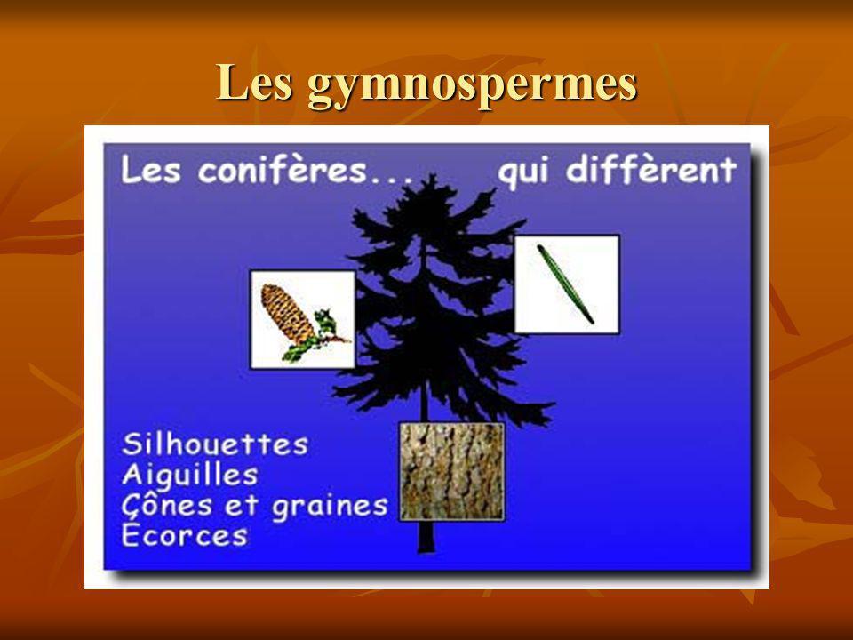 Les gymnospermes