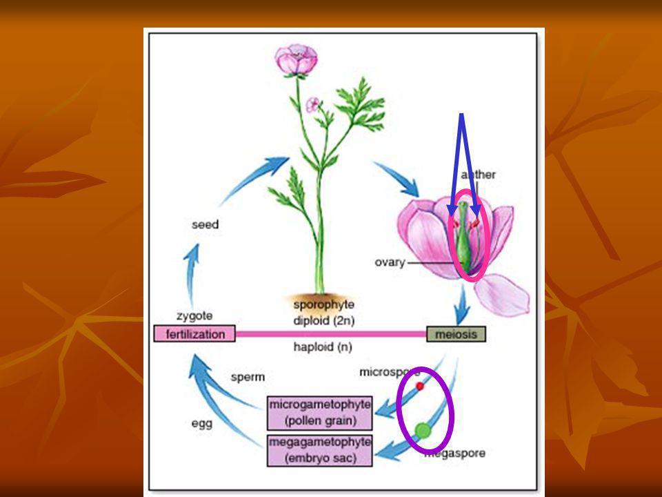Comparaison des types de reproduction