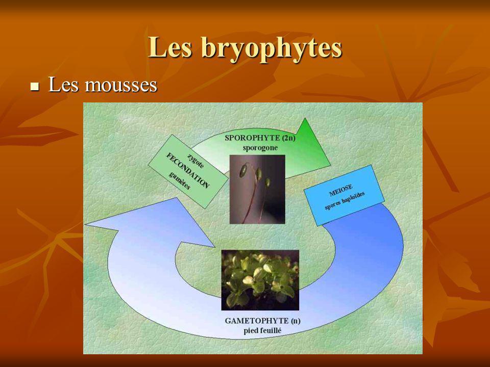 Les bryophytes Les mousses Les mousses
